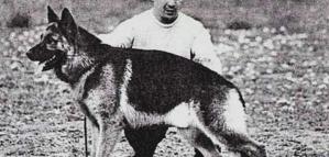Los perros que están en la historia: el de San Martín, los caniches de Perón y los que combatieron en Malvinas