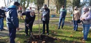 """""""Plantar un árbol en Saladillo"""", propuesto de interés por la Cámara de Diputados"""